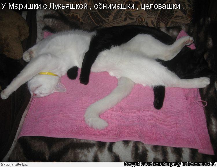 Котоматрица: У Маришки с Лукьяшкой , обнимашки , целовашки .