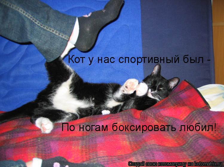 Котоматрица: Кот у нас спортивный был -  По ногам боксировать любил!