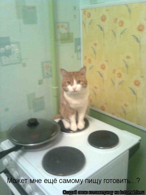 Котоматрица: Может мне ещё самому пищу готовить...?