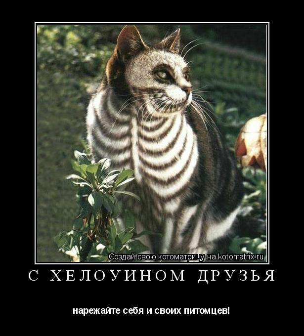 Котоматрица: с хелоуином друзья нарежайте себя и своих питомцев!