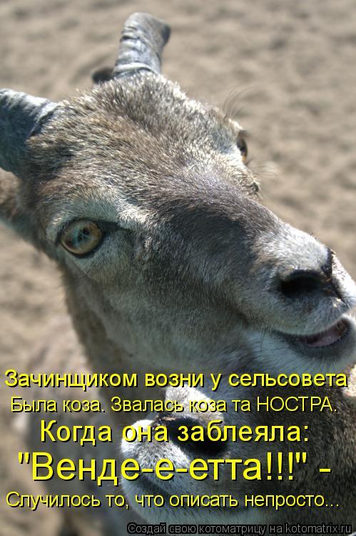 """Котоматрица: Зачинщиком возни у сельсовета Была коза. Звалась коза та НОСТРА. Когда она заблеяла: """"Венде-е-етта!!!"""" - Случилось то, что описать непросто..."""