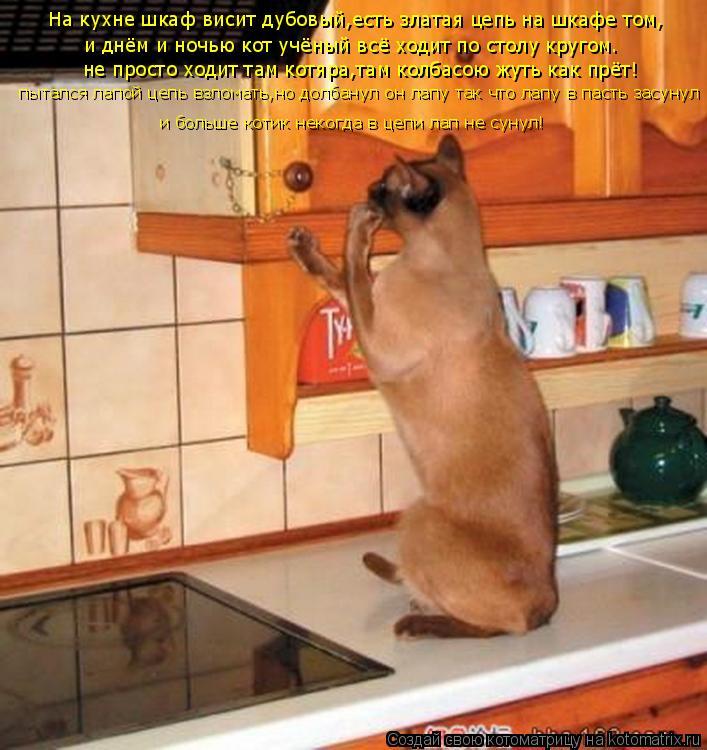 Котоматрица: На кухне шкаф висит дубовый,есть златая цепь на шкафе том, и днём и ночью кот учёный всё ходит по столу кругом. не просто ходит там котяра,там