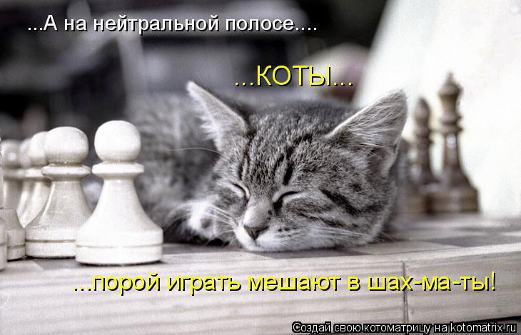 Котоматрица: ...А на нейтральной полосе.... ...КОТЫ... ...порой играть мешают в шах-ма-ты!