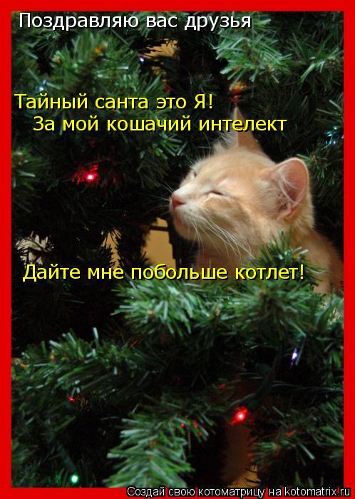 Котоматрица: Поздравляю вас друзья  Тайный санта это Я! За мой кошачий интелект  Дайте мне побольше котлет!