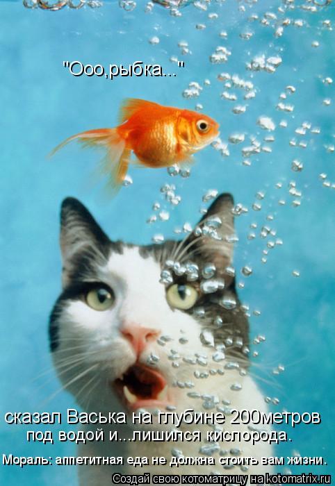 """Котоматрица: сказал Васька на глубине 200метров под водой и...лишился кислорода. """"Ооо,рыбка..."""" Мораль: аппетитная еда не должна стоить вам жизни."""