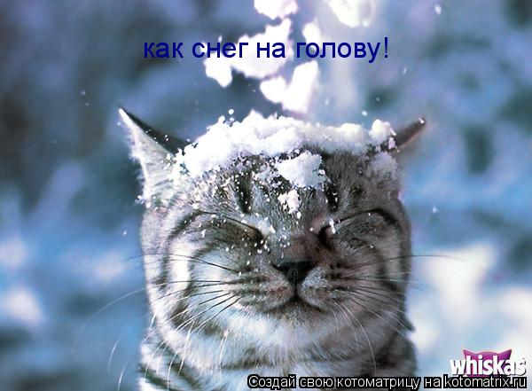 Котоматрица: как снег на голову!