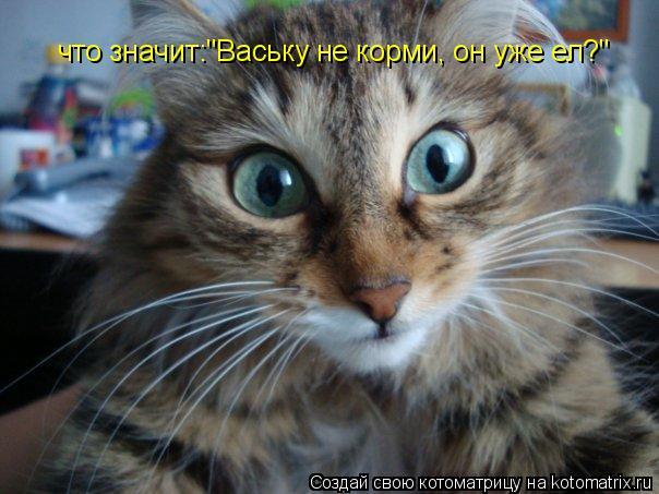 """Котоматрица: что значит:""""Ваську не корми, он уже ел?"""""""
