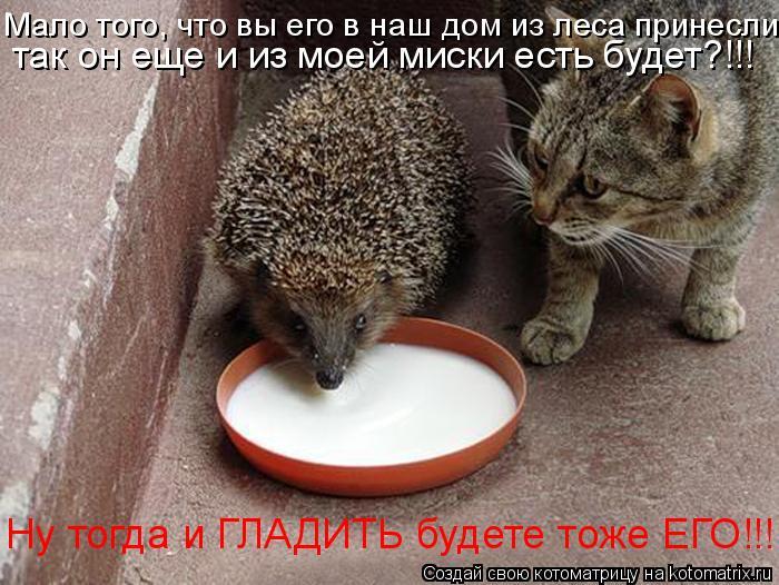 Котоматрица: Мало того, что вы его в наш дом из леса принесли,  так он еще и из моей миски есть будет?!!! Ну тогда и ГЛАДИТЬ будете тоже ЕГО!!!