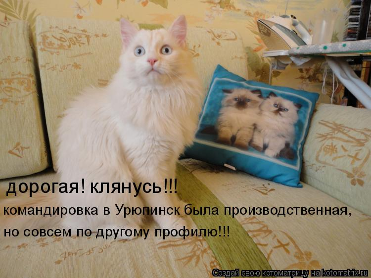 Котоматрица: дорогая! клянусь!!! командировка в Урюпинск была производственная, но совсем по другому профилю!!!