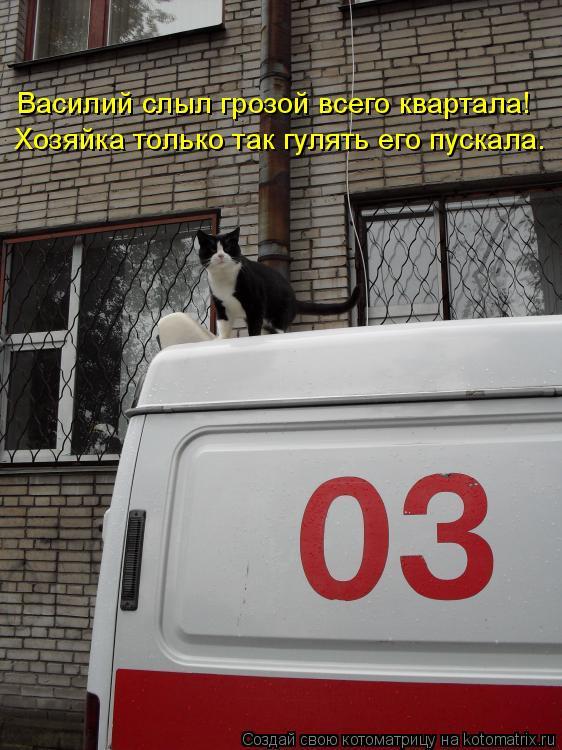 Котоматрица: Василий слыл грозой всего квартала!  Хозяйка только так гулять его пускала.
