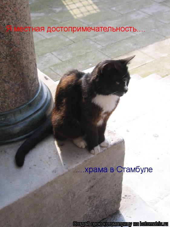 Котоматрица: Я местная достопримечательность.... ....храма в Стамбуле