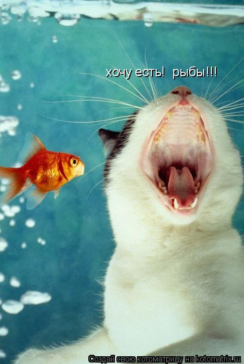 Котоматрица: хочу есть!  рыбы!!!