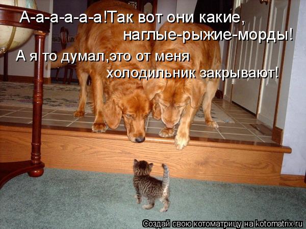 Котоматрица: А-а-а-а-а-а!Так вот они какие, наглые-рыжие-морды! А я то думал,это от меня холодильник закрывают!