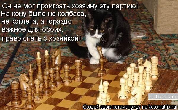 Котоматрица: Он не мог проиграть хозяину эту партию! На кону было не колбаса, не котлета, а гораздо важное для обоих: право спать с хозяйкой!