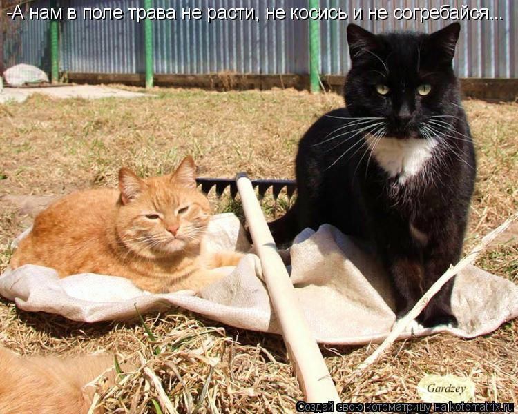 Котоматрица: -А нам в поле трава не расти, не косись и не согребайся...