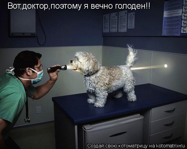 Котоматрица: Вот,доктор,поэтому я вечно голоден!!