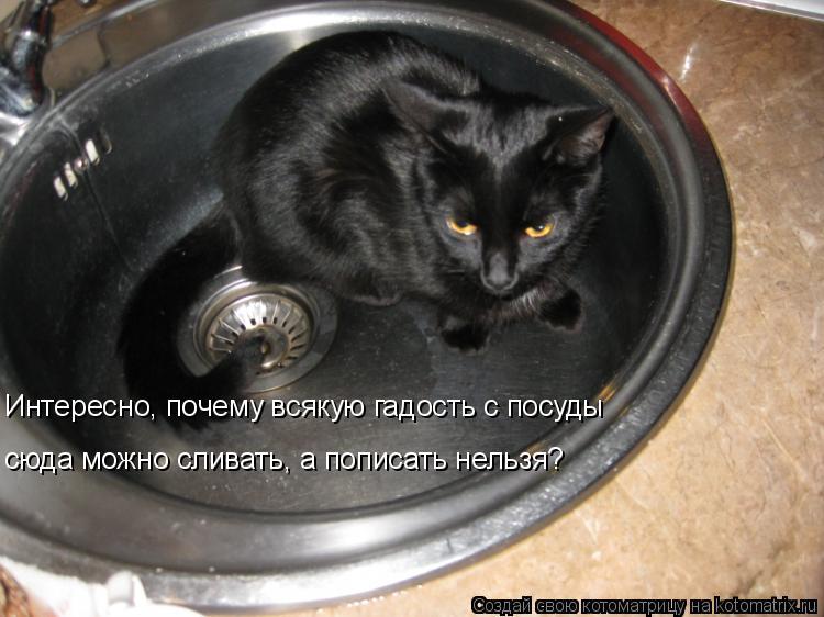 Котоматрица: Интересно, почему всякую гадость с посуды сюда можно сливать, а пописать нельзя?