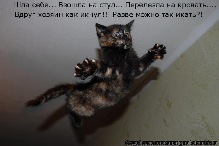 Котоматрица: Шла себе... Взошла на стул... Перелезла на кровать.... Вдруг хозяин как икнул!!! Разве можно так икать?!