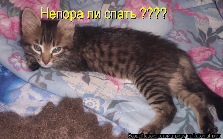 Котоматрица: Непора ли спать ????