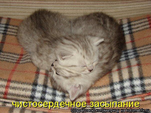 Котоматрица: чистосердечное засыпание