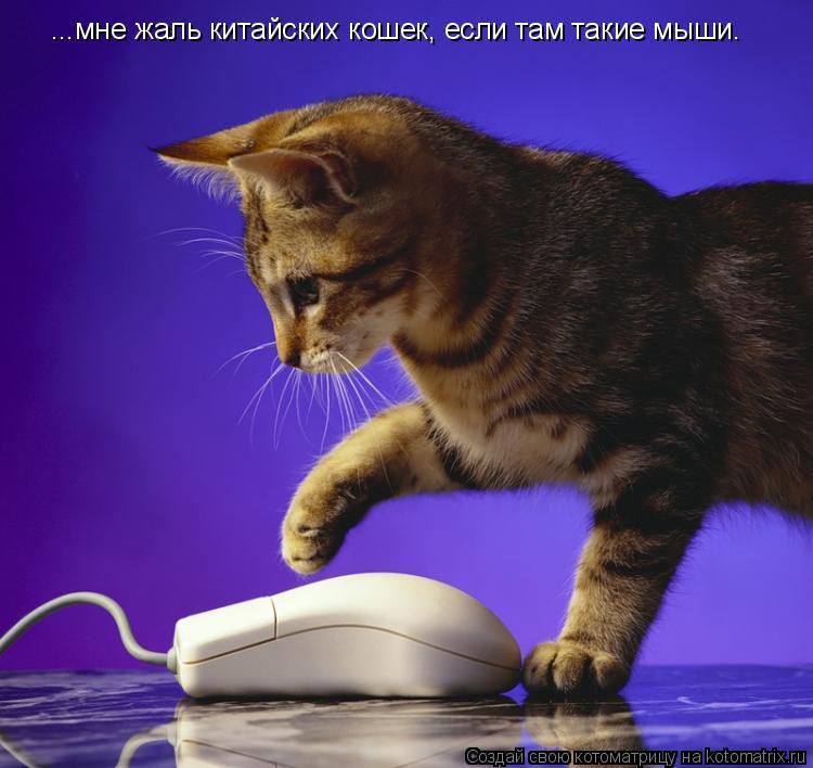 Котоматрица: ...мне жаль китайских кошек, если там такие мыши.