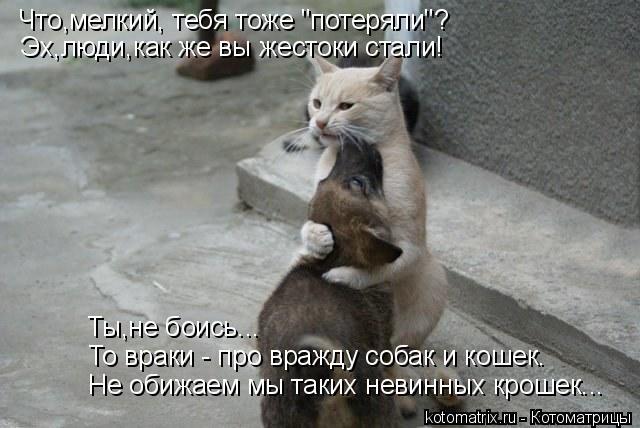 """Котоматрица: Что,мелкий, тебя тоже """"потеряли""""? Эх,люди,как же вы жестоки стали! Не обижаем мы таких невинных крошек... То враки - про вражду собак и кошек. Ты,"""