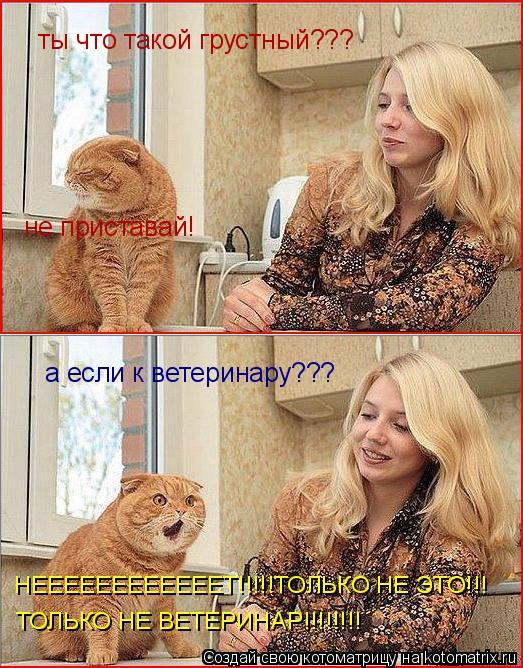 Котоматрица: ты что такой грустный??? не приставай! а если к ветеринару??? НЕЕЕЕЕЕЕЕЕЕЕЕТ!!!!!ТОЛЬКО НЕ ЭТО!!! ТОЛЬКО НЕ ВЕТЕРИНАР!!!!!!!!