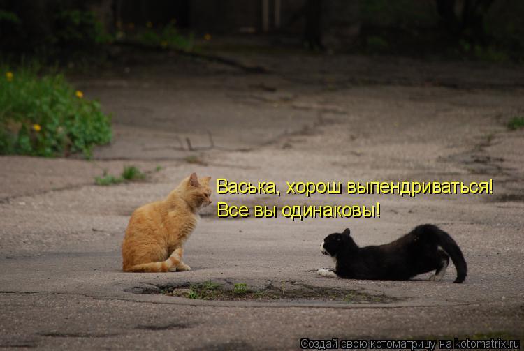 Котоматрица: Васька, хорош выпендриваться! Все вы одинаковы!