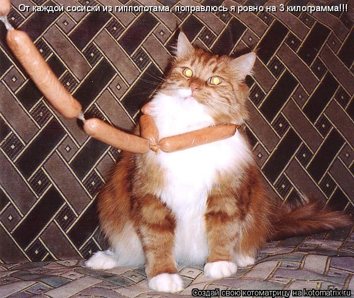 Котоматрица: От каждой сосиски из гиппопотама, поправлюсь я ровно на 3 килограмма!!!