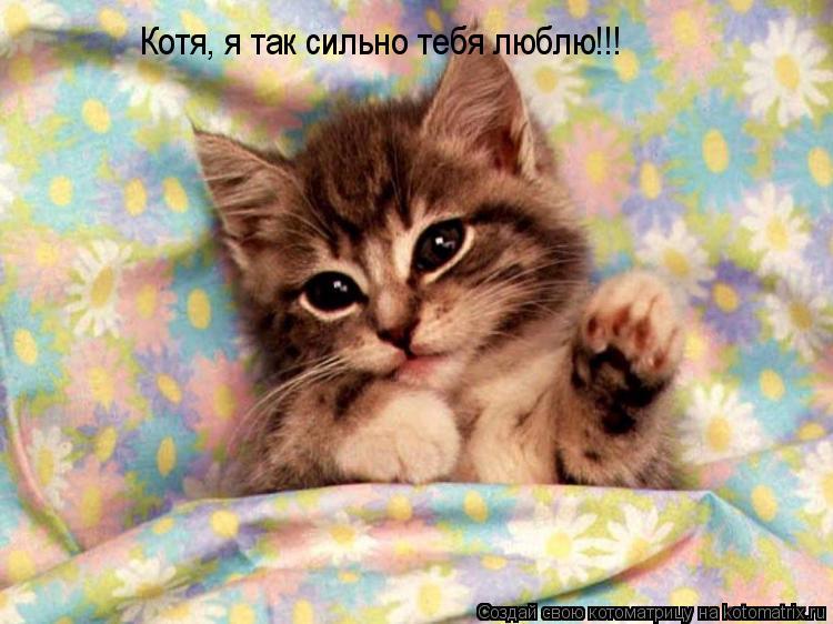 Котоматрица: Котя, я так сильно тебя люблю!!!