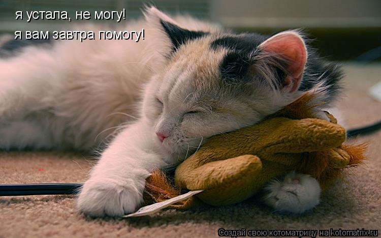 Котоматрица: я устала, не могу! я вам завтра помогу!
