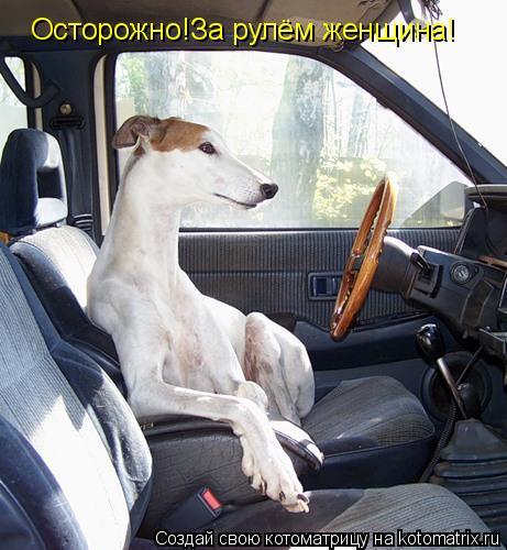Котоматрица: Осторожно!За рулём женщина!
