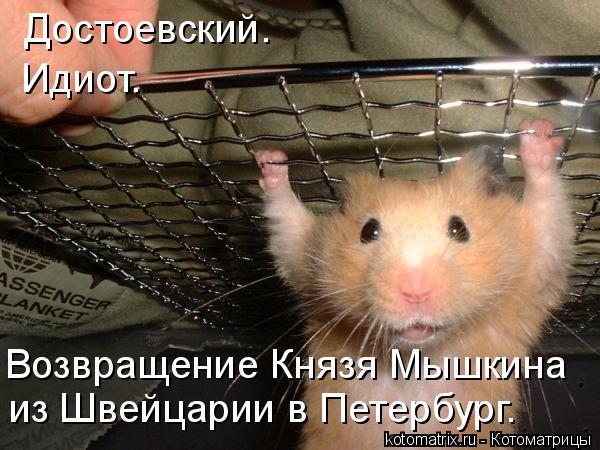 Котоматрица: Достоевский.  Идиот. Возвращение Князя Мышкина  из Швейцарии в Петербург.
