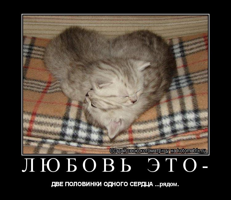 Котоматрица: Любовь это- ДВЕ ПОЛОВИНКИ ОДНОГО СЕРДЦА ...рядом.