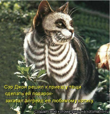 Котоматрица: Сэр Джон решил к приезду тёщи сделать ей подарок- заказал апгрейд её любимому котику.