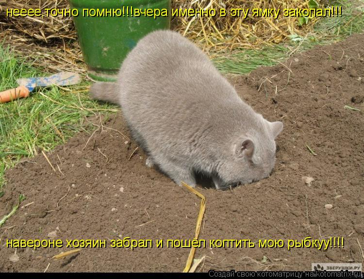 http://kotomatrix.ru/images/lolz/2010/09/21/684167.jpg
