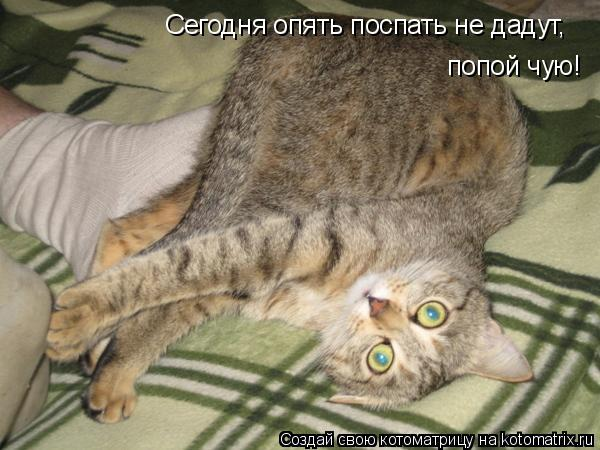 Котоматрица: Сегодня опять поспать не дадут, попой чую!