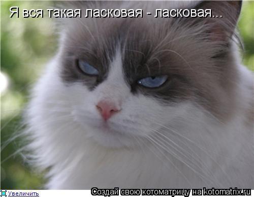 Котоматрица: Я вся такая ласковая - ласковая...