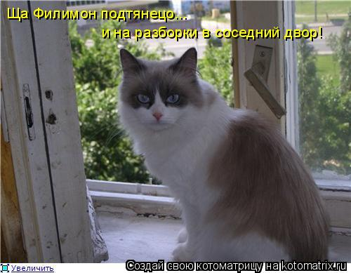 Котоматрица: Ща Филимон подтянецо... и на разборки в соседний двор!