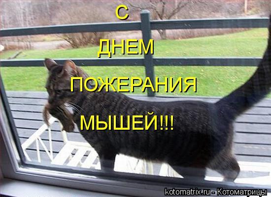 Котоматрица: С ДНЕМ ПОЖЕРАНИЯ МЫШЕЙ!!!
