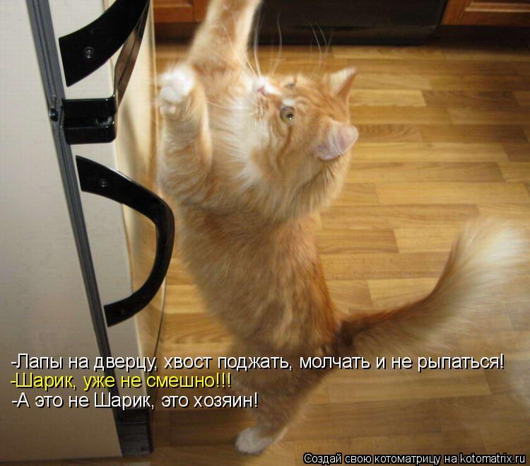 Котоматрица: -Лапы на дверцу, хвост поджать, молчать и не рыпаться! -Шарик, уже не смешно!!! -А это не Шарик, это хозяин!