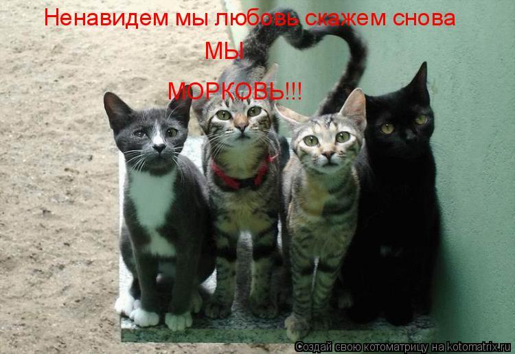 Котоматрица: Ненавидем мы любовь скажем снова МЫ МОРКОВЬ!!!
