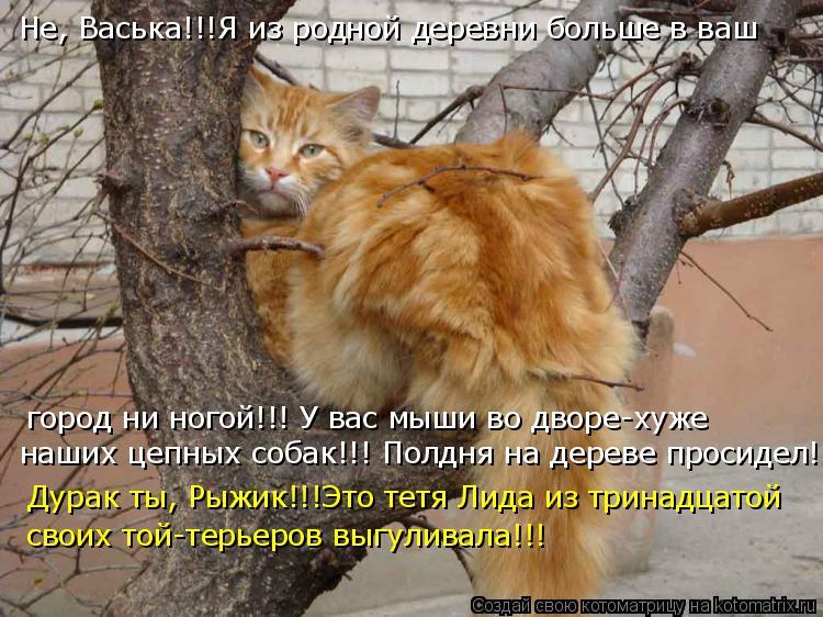 Котоматрица: Не, Васька!!!Я из родной деревни больше в ваш город ни ногой!!! У вас мыши во дворе-хуже наших цепных собак!!! Полдня на дереве просидел! Дурак т