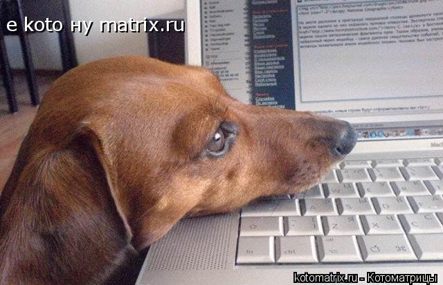 Котоматрица: е koto ну matrix.ru