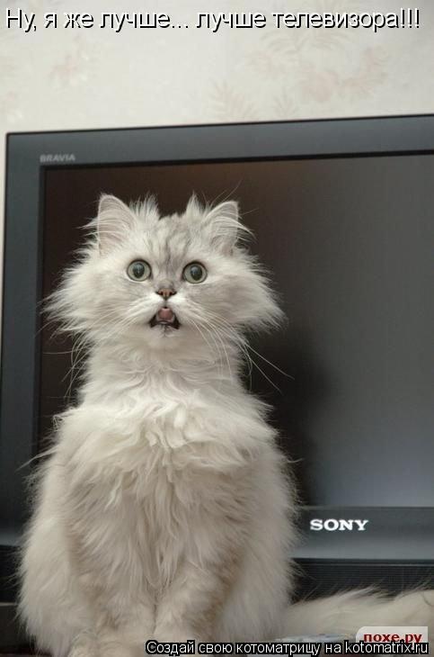 Котоматрица: Ну, я же лучше... лучше телевизора!!!