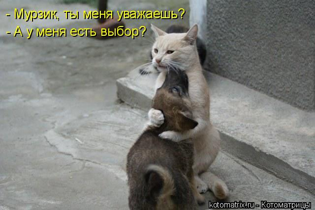 - Мурзик, ты меня уважаешь? - А у меня есть выбор?