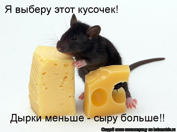Котоматрица: Я выберу этот кусочек!  Дырки меньше - сыру больше!!