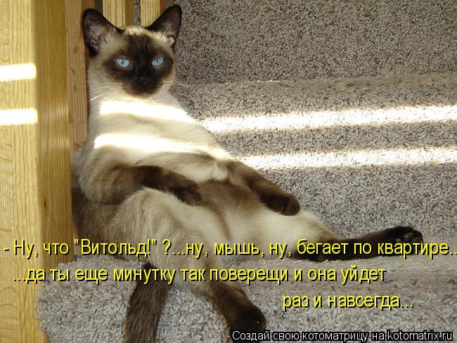 """Котоматрица: - Ну, что """"Витольд!"""" ?...ну, мышь, ну, бегает по квартире... ...да ты еще минутку так поверещи и она уйдет  раз и навсегда..."""