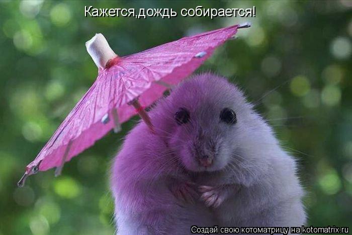 Котоматрица: Кажется,дождь собирается!