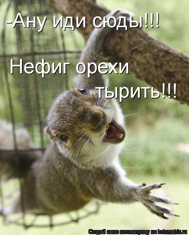 Котоматрица: -Ану иди сюды!!! Нефиг орехи  тырить!!!